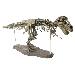 Delly 4D 28″/70cm PVC Assembling Skeleton Dinosaur Simulation Animal Model Toys Gifts Children Educational Science Toy DSA-01